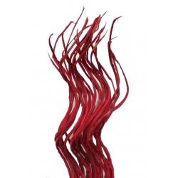 Coco Lashings Red