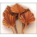 Palm Spear Brown