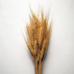 Wheat Natural 8oz.