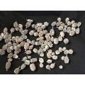 Cassurina Pod Stone Washed White 8oz.