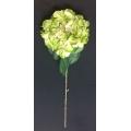 "Hydrangea Green 34"""