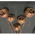 Talami Chocolate Glitter (5)